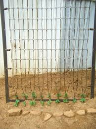 red dirt memories princess u0027s bed as a pea trellis