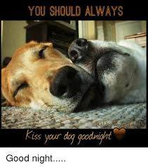 Dog Kiss Meme - you should always kiss your dog goodnight good night meme on me me