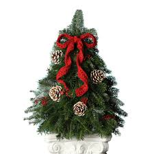 tabletop christmas tree fresh tabletop christmas trees snowgreens