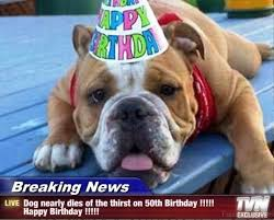 Birthday Animal Meme - 48 amazing birthday memes