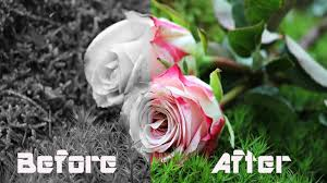 Color Image Online by How To Change Black And White Into Color Photo Online In Hindi