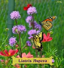 gorgeous butterfly plants list butterfly flowers and host plant