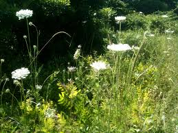 jan blencowe the poetic landscape painting wildflowers queen