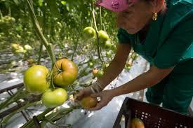 putin grows organic indoor farming garden culture magazine