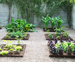Vegetable Beds Vegetable Beds Pictures Png