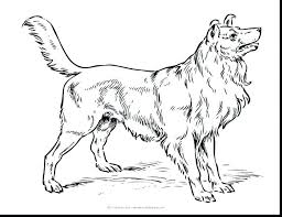 coloring pages chihuahua puppies realistic puppy coloring pages medium size of wonderful puppy