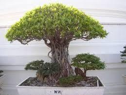 small tree photo free