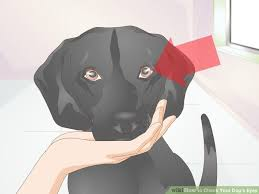 Dog Going Blind What To Do How Do You Know If Your Going Blind Best Blind 2017