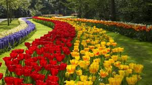 keukenhof the most beautiful gardens in the world tedy travel