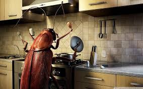 cafards cuisine en cuisine
