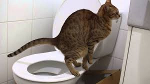 my cat poops funny youtube