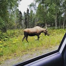 Moose Meme - i once saw a meme that gave animals proper names and it referred