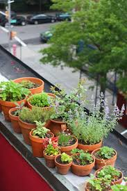 roof garden plants 66 square feet plus plants for a roof garden up and down