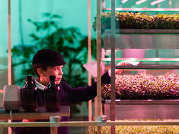 ikea u0027s space10 debuts a vertical farm business insider