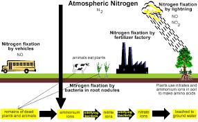 nitrogen cycle chemistry tutorial