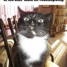 tag cute cat pictures thanksgiving cats british