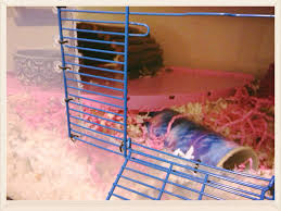 How Much Is A Hamster Cage Diy Hamster Cage Bin Cage Hammy Happenings