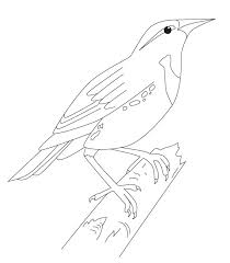 iowa state bird coloring page sketch coloring page