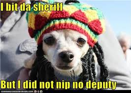 Reggae Meme - i has a hotdog dreads funny dog pictures dog memes puppy