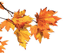 fyi why do leaves turn different colors popular science