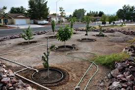 Dave Wilson Nursery Backyard Orchard by Order Bare Root Fruit Trees Now Artistic Gardener