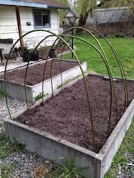 blackberry trellis rainyleaf