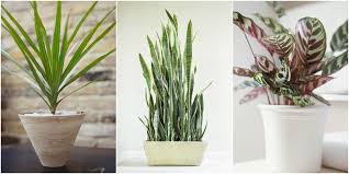 small low light plants low light indoor plants weliketheworld com