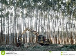 eucalyptus trees cut equipment stock photos image 13132183