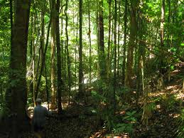 an essay on the flora and fauna of the daintree forest writework