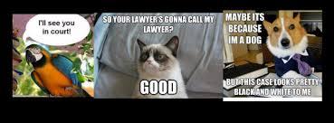 Lawyer Cat Meme - gab