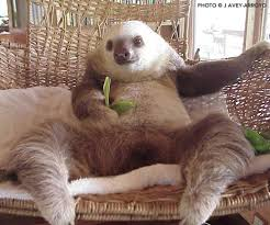 sloth sanctuary captures cutest conversation between 2 chatty