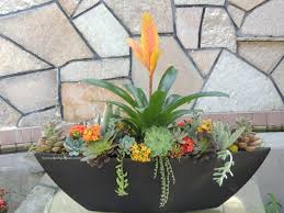 succulent arrangements succulent arrangement oblong san diego only succulents