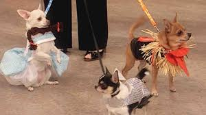 matching dog and owner halloween costumes pet costumes martha stewart