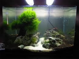 Aquascape Tree Will This Make A Good Moss Tree And Best Moss To Use Updated