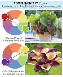 garden color 101