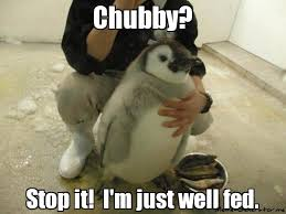 Chubby Meme - chubby stop it i funny animals pinterest funny animal and meme