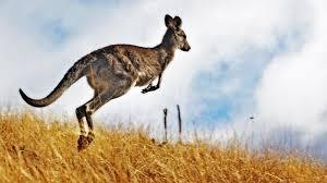 kangaroo hopping ngsversion 1412637457913 jpg