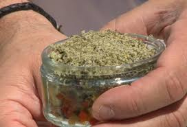cuisiner les orties la cuisine des mauvaises herbes présentation de l ortie et du