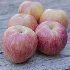 organic fruit basket delivery organic fruit gift basket fruit gift delivery usa