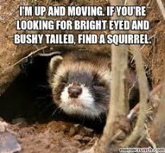 Ferret Meme - image result for funny ferret quotes cuteness pinterest