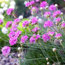 the most beautiful pink flowers in the garden grow u2013 landscaping