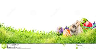 rabbit banner easter bunny with eggs and flowers in garden grass on white