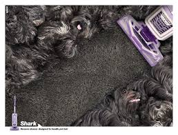 affenpinscher india shark print advert by mench pet hair ads of the world
