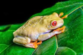 tree frogs rainforest s