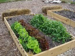 garden ideas vegetable gardening outdoor decoration ideas with