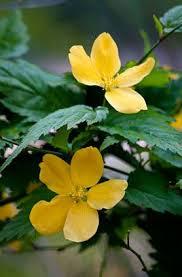 All Year Flowering Shrubs - 50 best sayle house images on pinterest