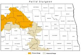 lake sakakawea map pallid sturgeon dakota and fish