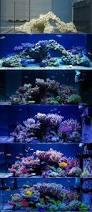 Live Rock Aquascaping 13 Best Aquascaping Images On Pinterest Aquarium Ideas