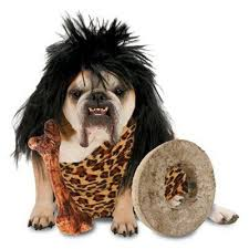 Leopard Costumes Halloween 83 Dog Halloween Costumes Images Animals