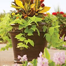 where to buy large planters better homes and gardens monteverde planter multiple sizes